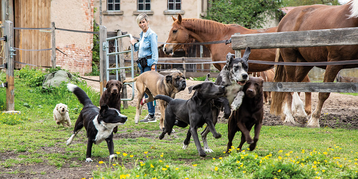 let's dog - Hundetraing & Hundepension Uehfeld
